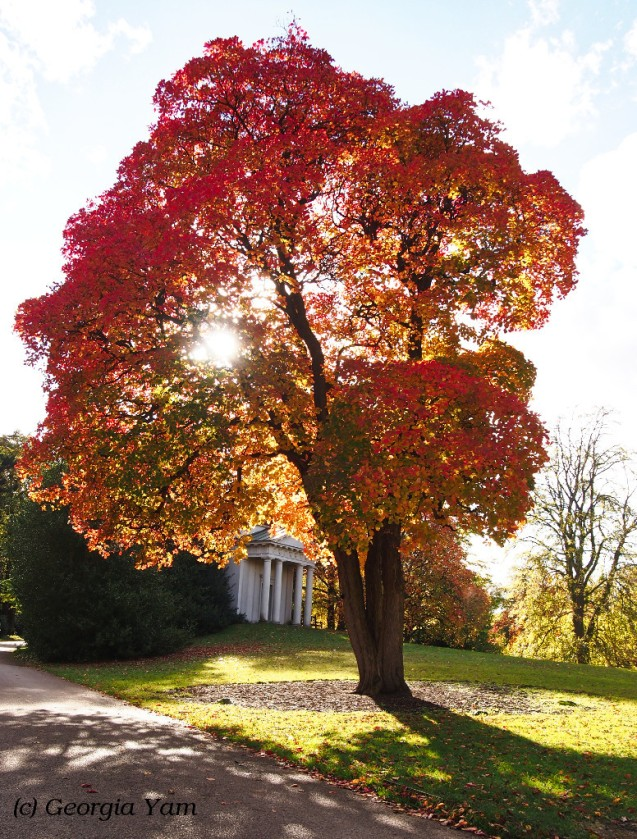 wonderful red tree