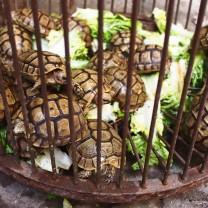 Turtles, Fes, Morocco
