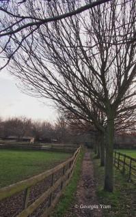 Earthy path