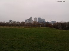 Canary Wharf from the city farm