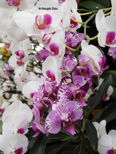 white and purple mixture, Kew Gardens
