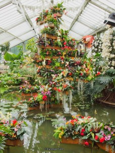 orchid display, Kew Gardens