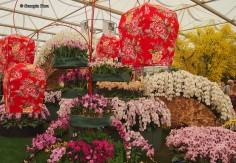 Taiwan Orchids, Chelsea Flower Show 2012
