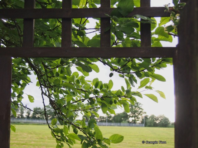 Framed View
