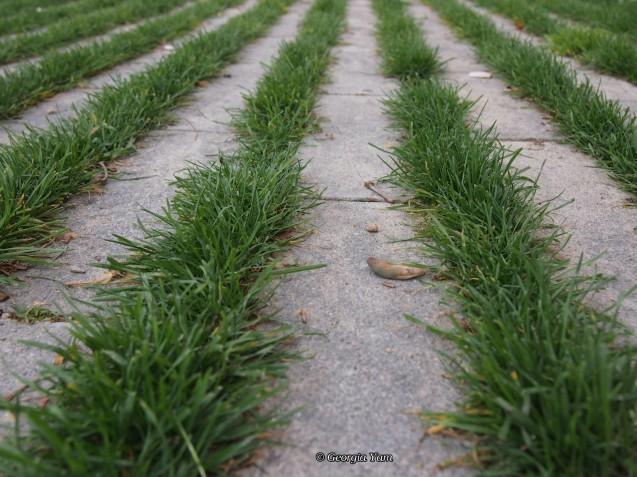 grassy lines