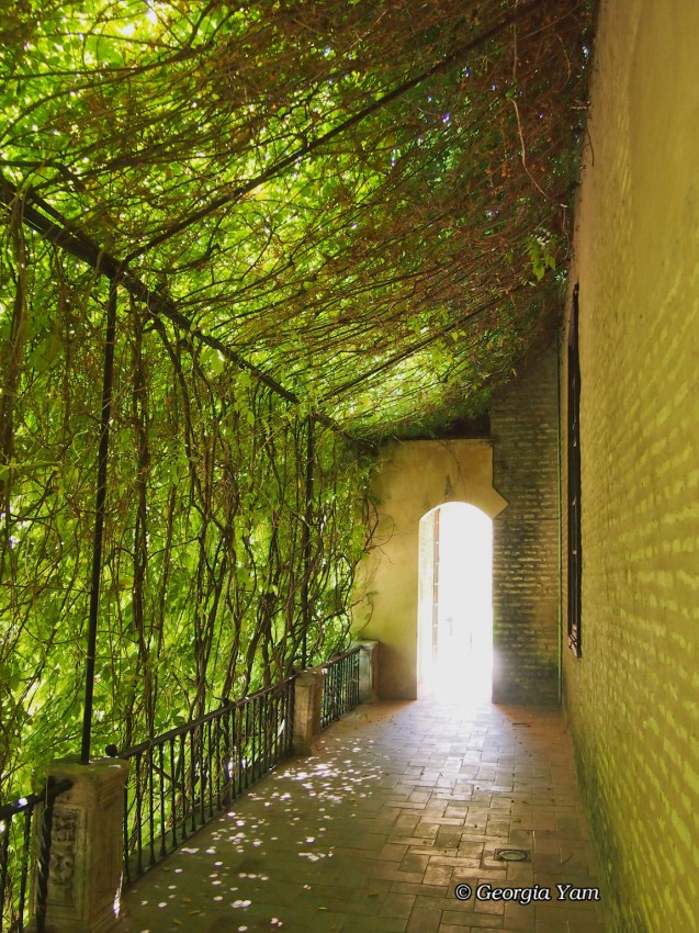 Walkway covered by leaves