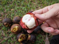 opened mangosteen