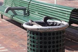 bird in a bin
