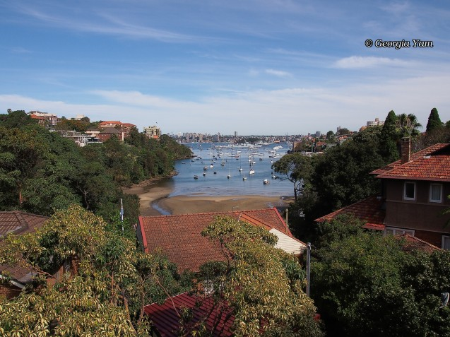 views from Neutral Bay
