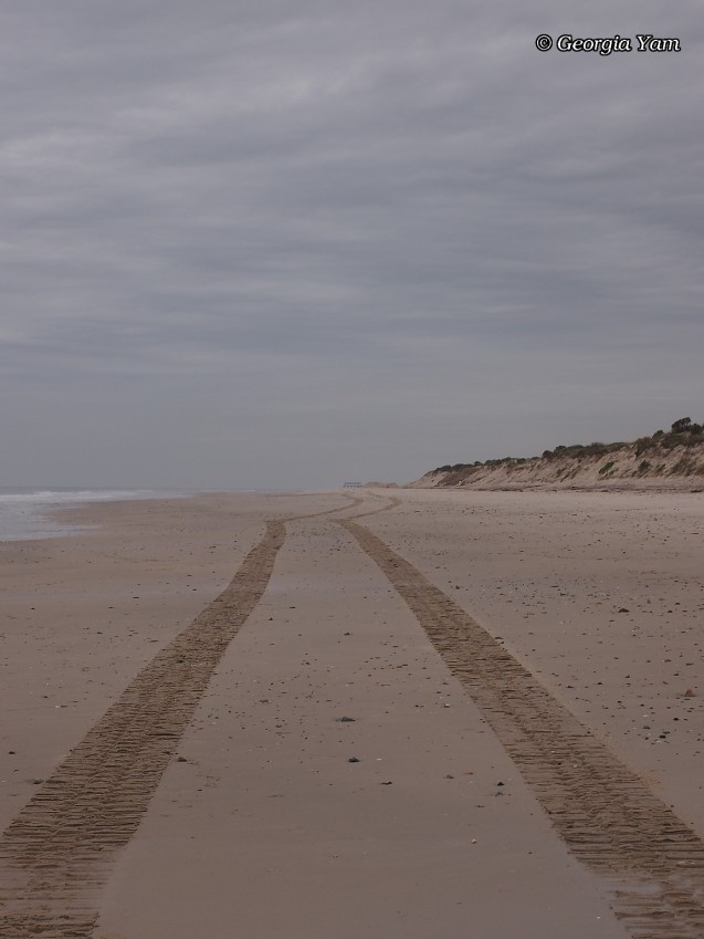 beach tyre tracks