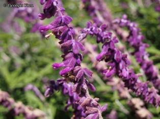 purple flowers bee