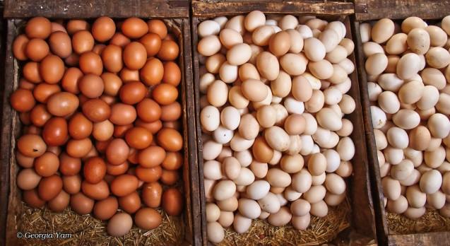 sepia eggs