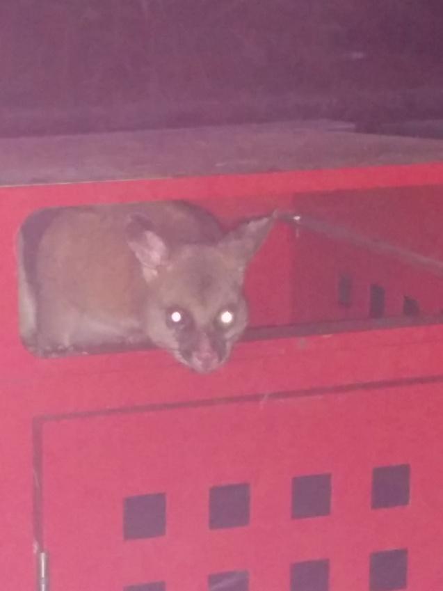 possum in a bin