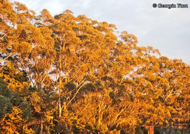 Shimmer tree