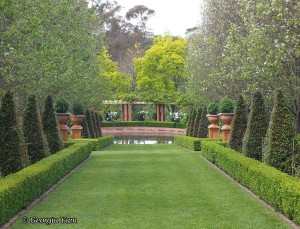 luscious green garden