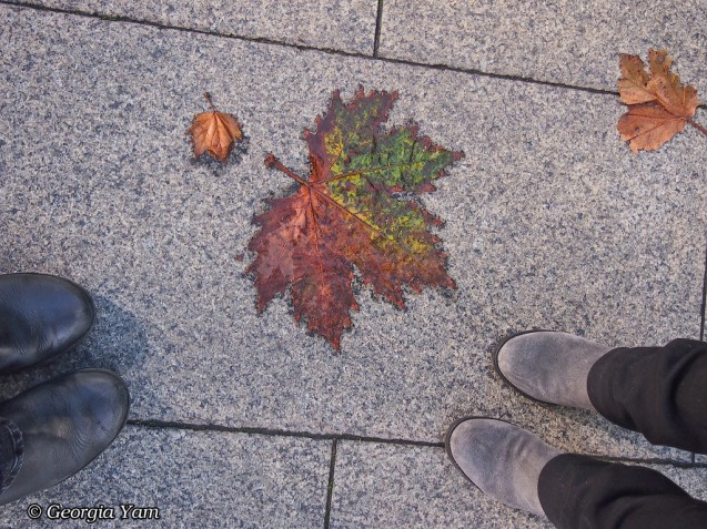 Autumn leaves feet