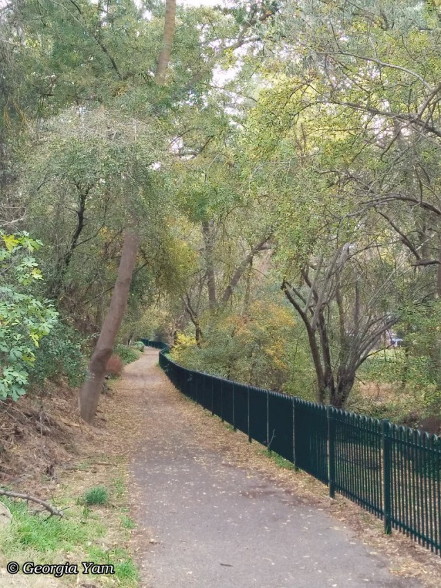 green trees on pathway