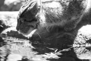 black and white cat head