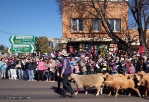 sheep parade street signs